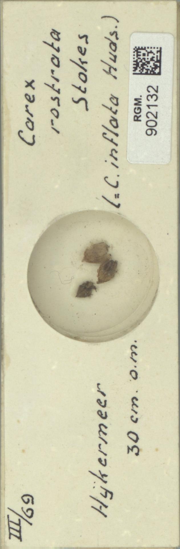 RGM.902132 | Carex rostrata Stokes