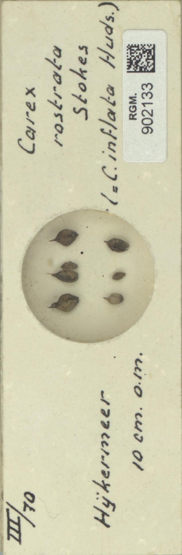 RGM.902133 | Carex rostrata Stokes