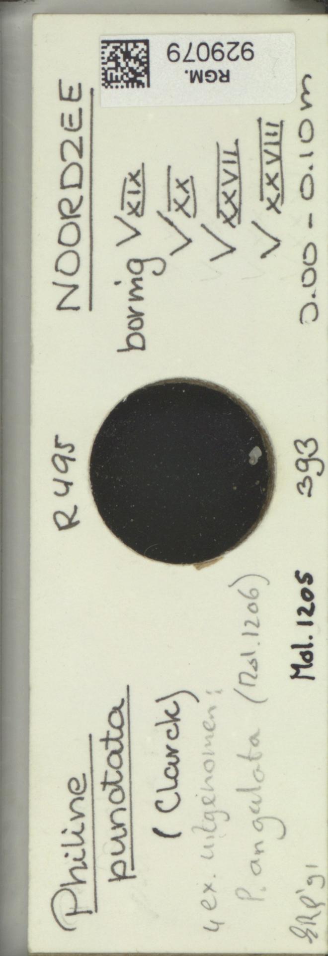 RGM.929079 | Philine punctata Clarck