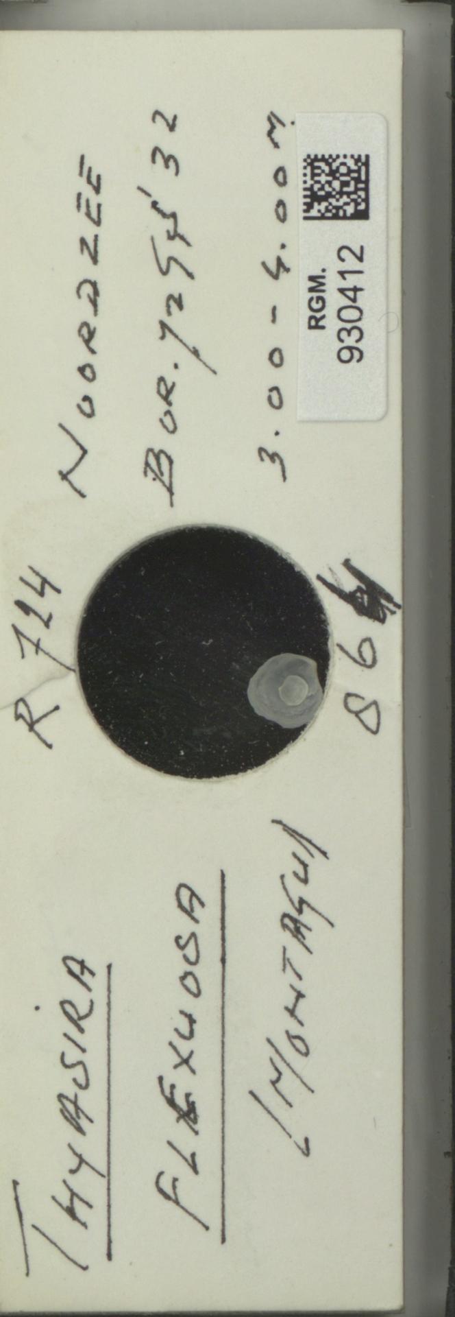 RGM.930412 | Thyasira flexuosa (Montagu)