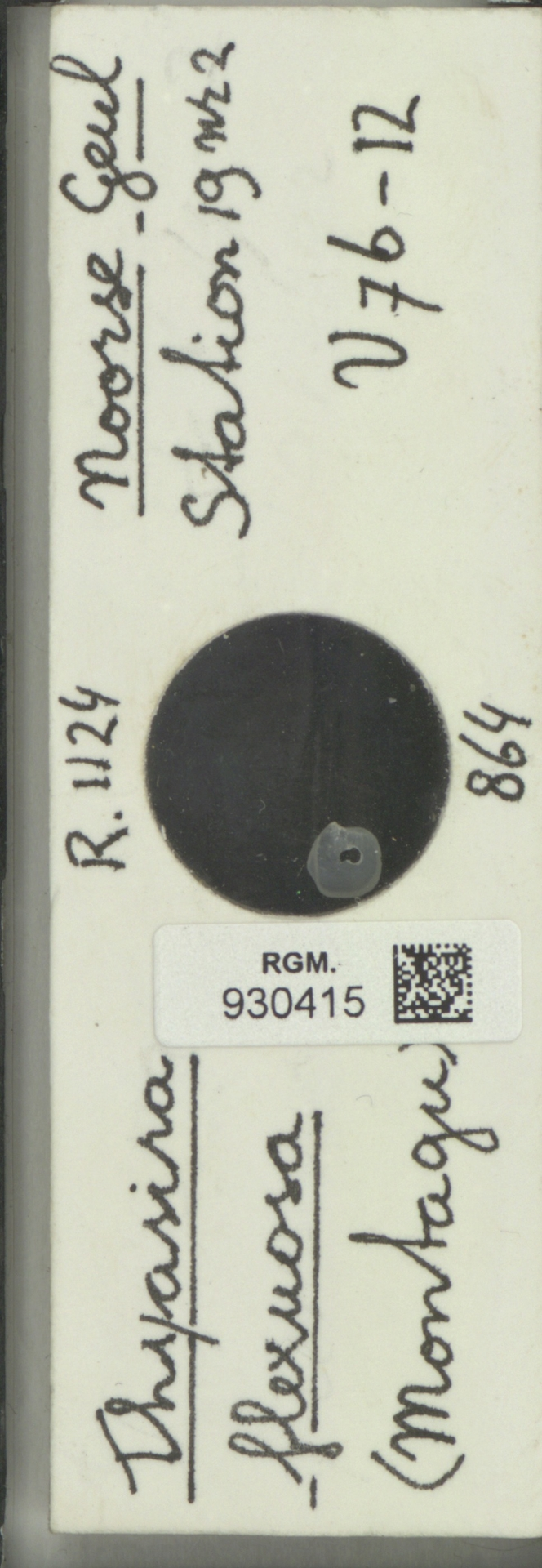 RGM.930415 | Thyasira flexuosa (Montagu)