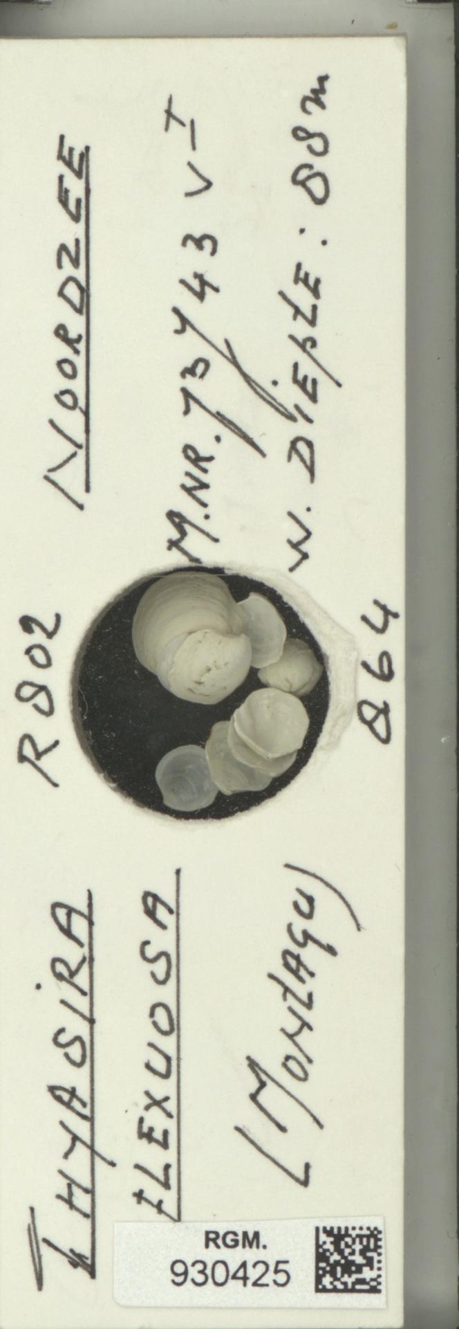 RGM.930425 | Thyasira flexuosa Montagu
