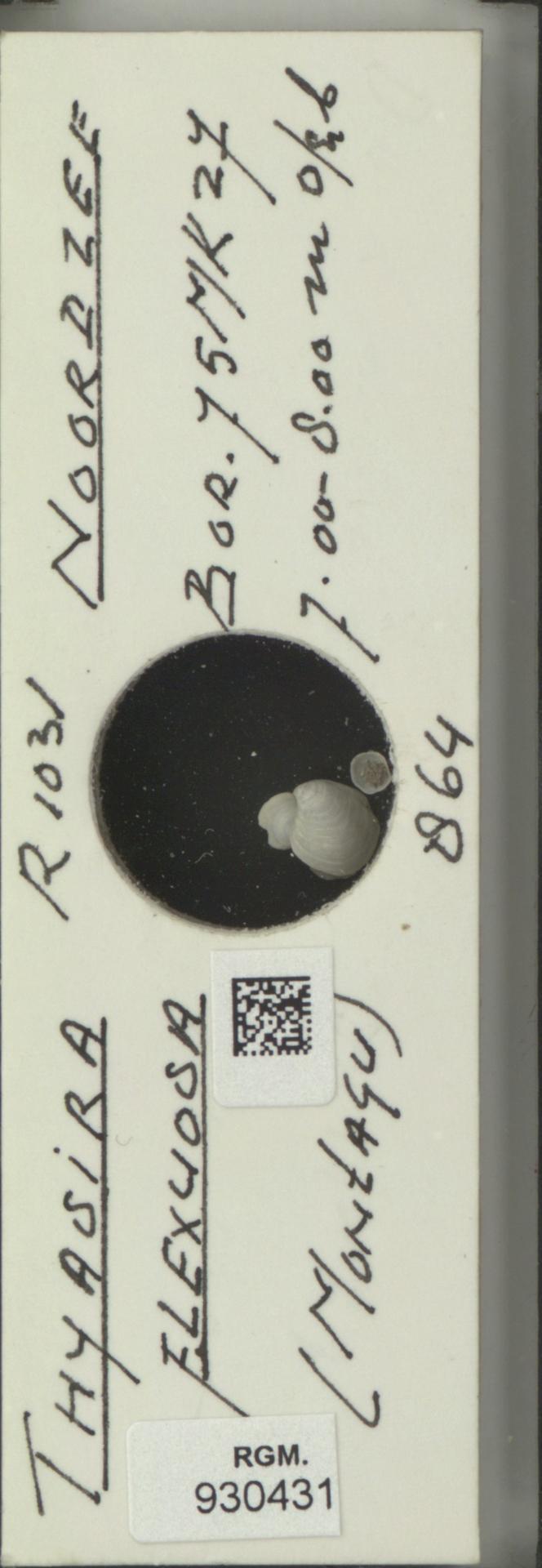 RGM.930431 | Thyasira flexuosa (Montagu)