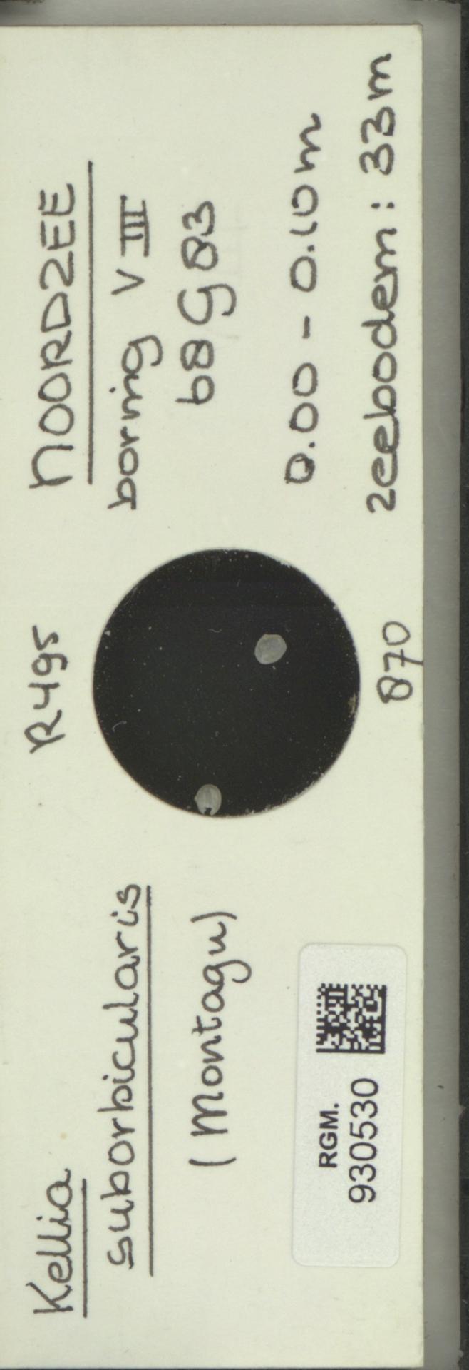 RGM.930530 | Kellia suborbicularis (Montagu)