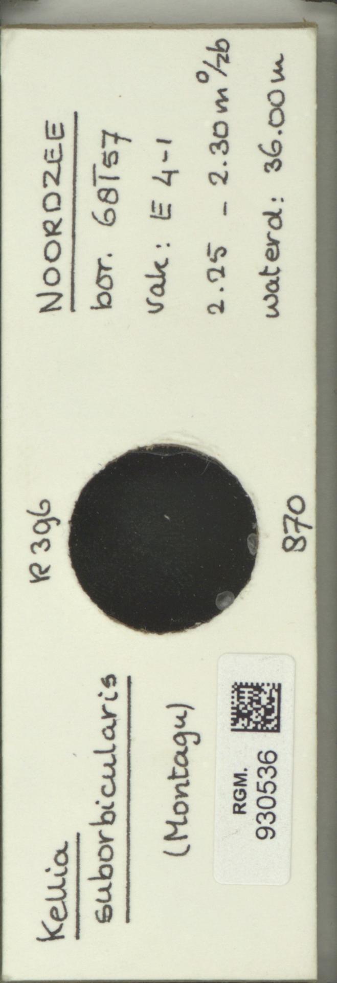 RGM.930536 | Kellia suborbicularis (Montagu)