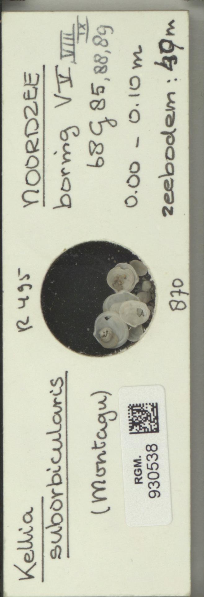 RGM.930538 | Kellia suborbicularis (Montagu)
