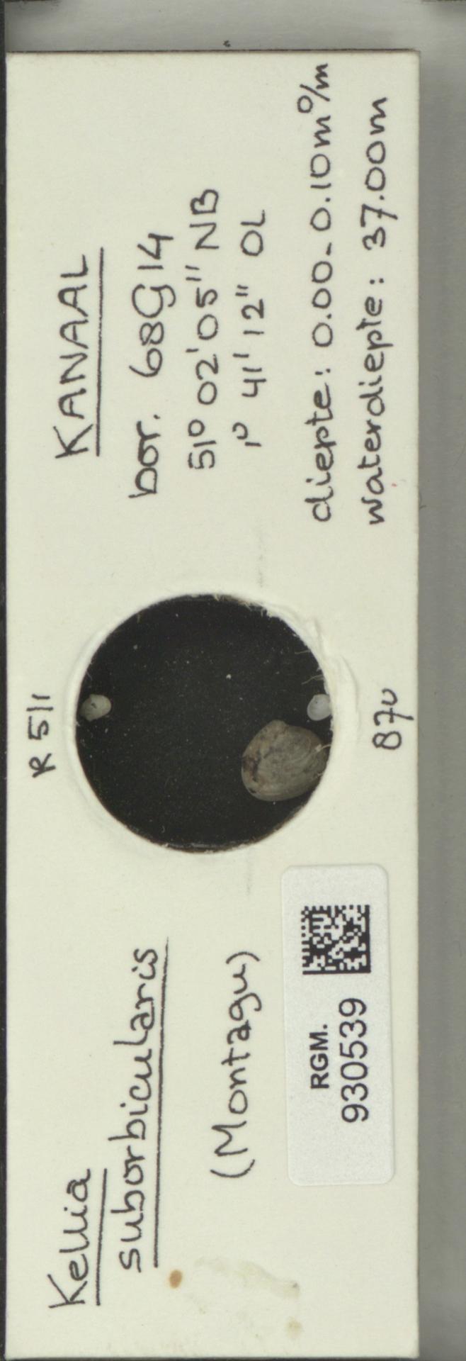 RGM.930539 | Kellia suborbicularis (Montagu)