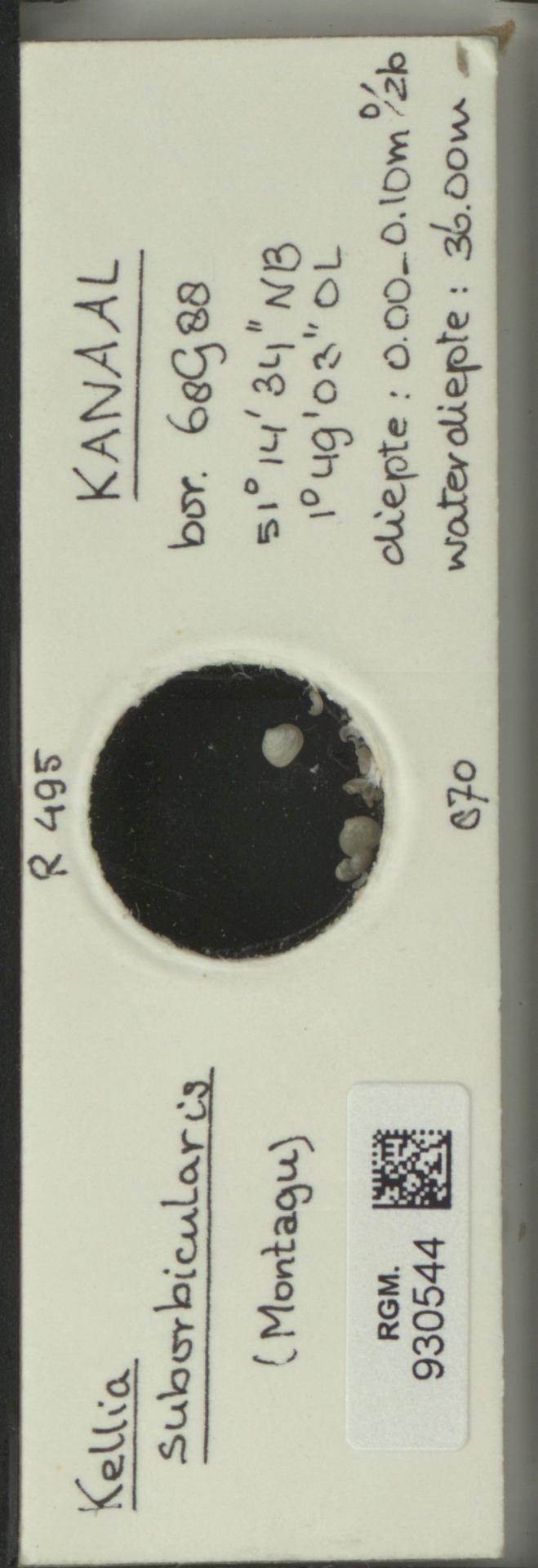 RGM.930544 | Kellia suborbicularis (Montagu)