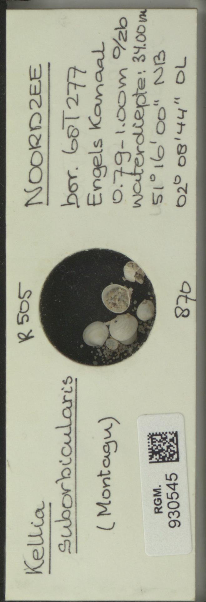 RGM.930545 | Kellia suborbicularis (Montagu)