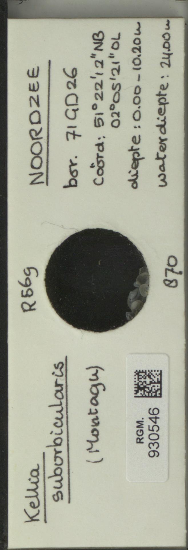 RGM.930546 | Kellia suborbicularis (Montagu)