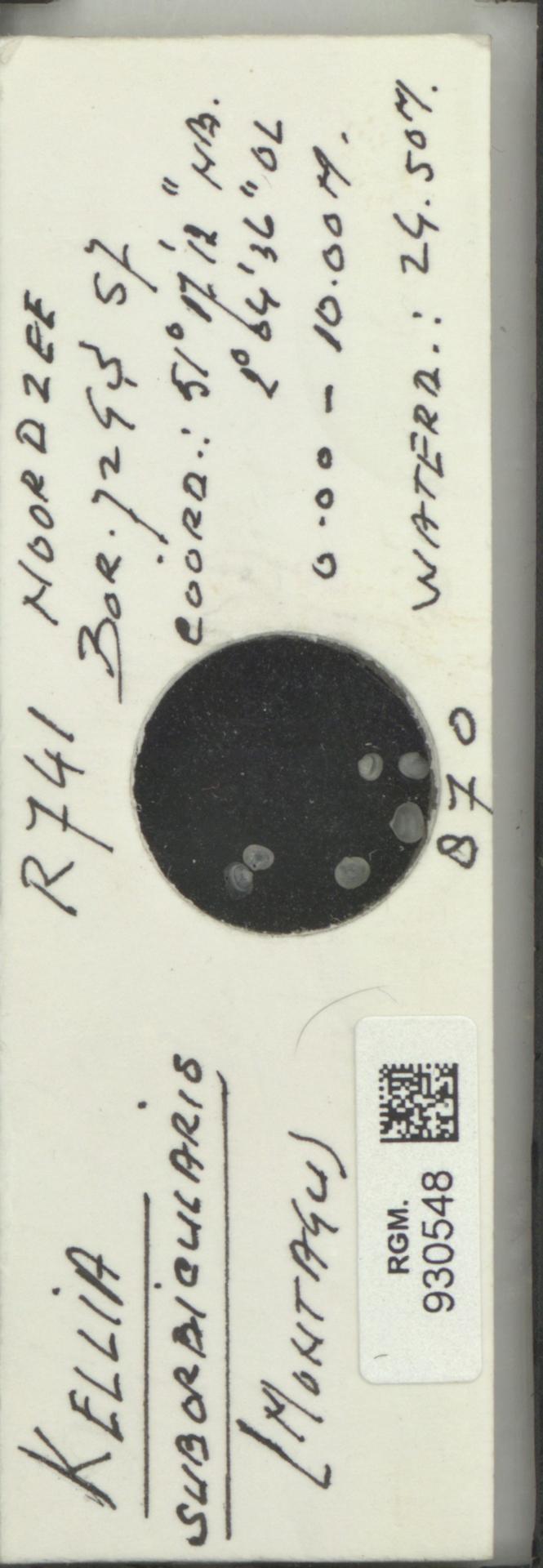 RGM.930548 | Kellia suborbicularis (Montagu)