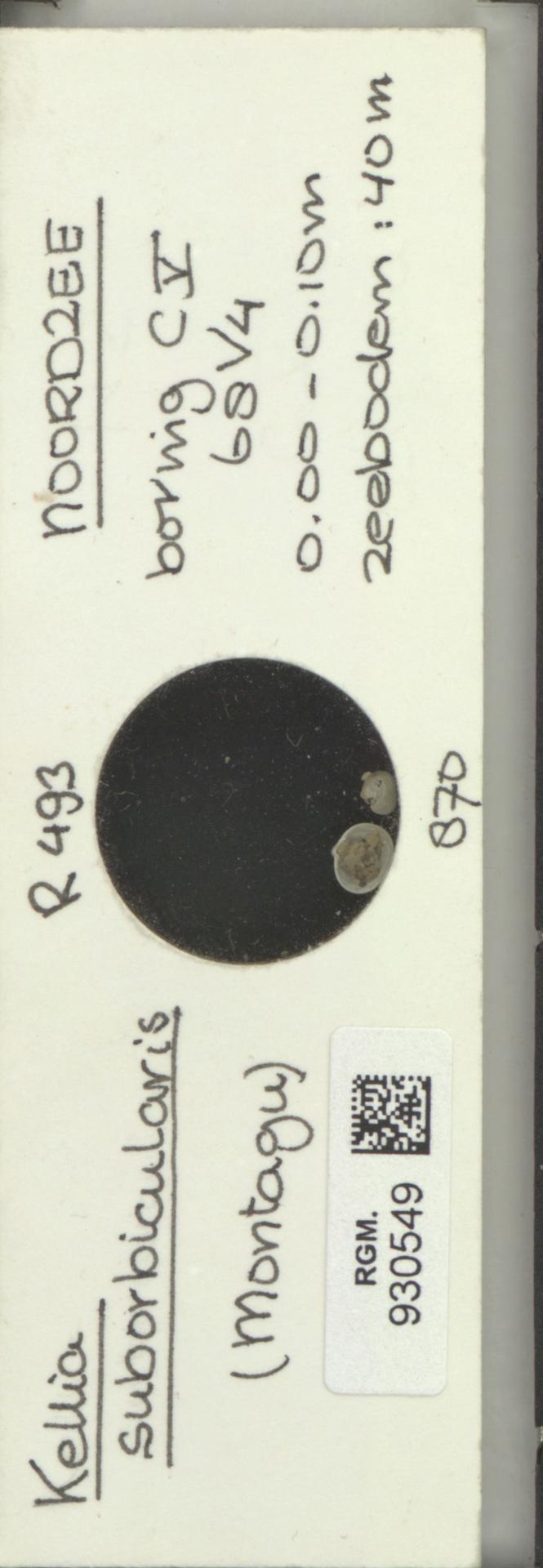 RGM.930549   Kellia suborbicularis (Montagu)