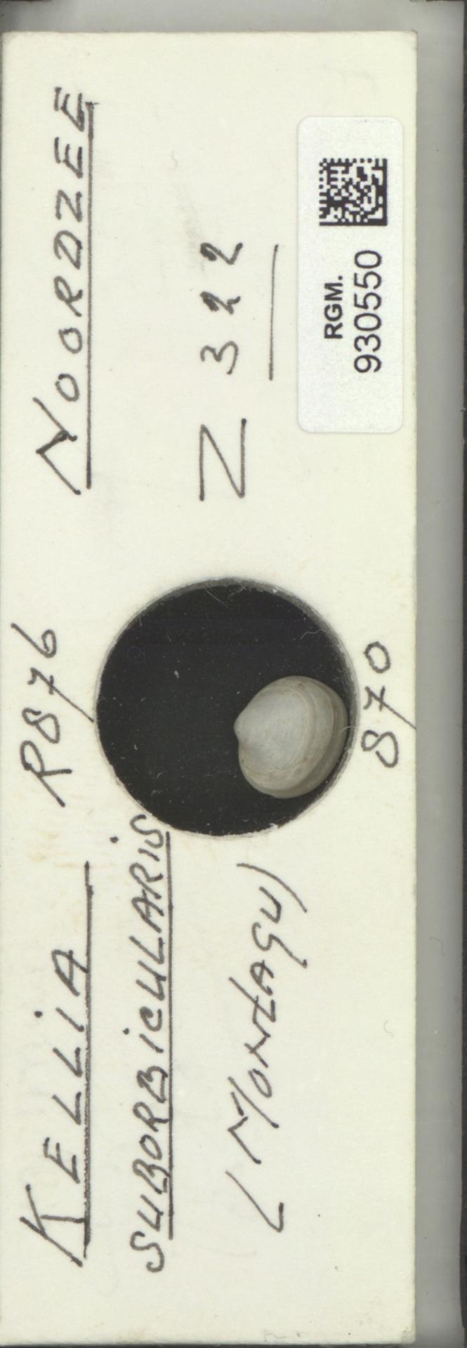 RGM.930550 | Kellia suborbicularis (Montagu)