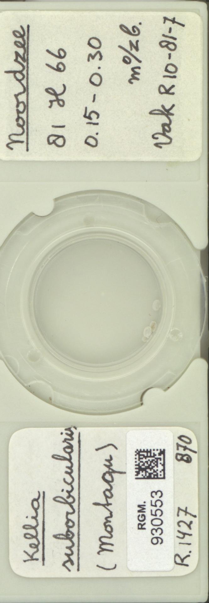 RGM.930553 | Kellia suborbicularis (Montagu)