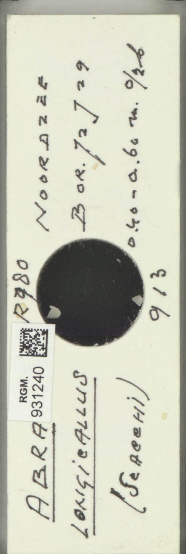RGM.931240 | Abra longicallus (Scacchi)