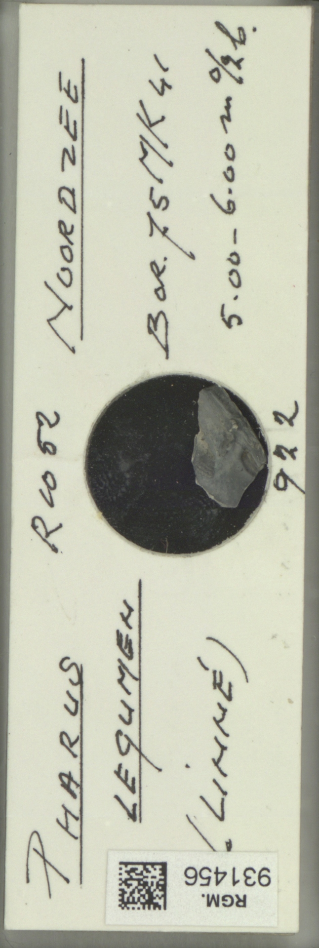 RGM.931456 | Pharus legumen Linné