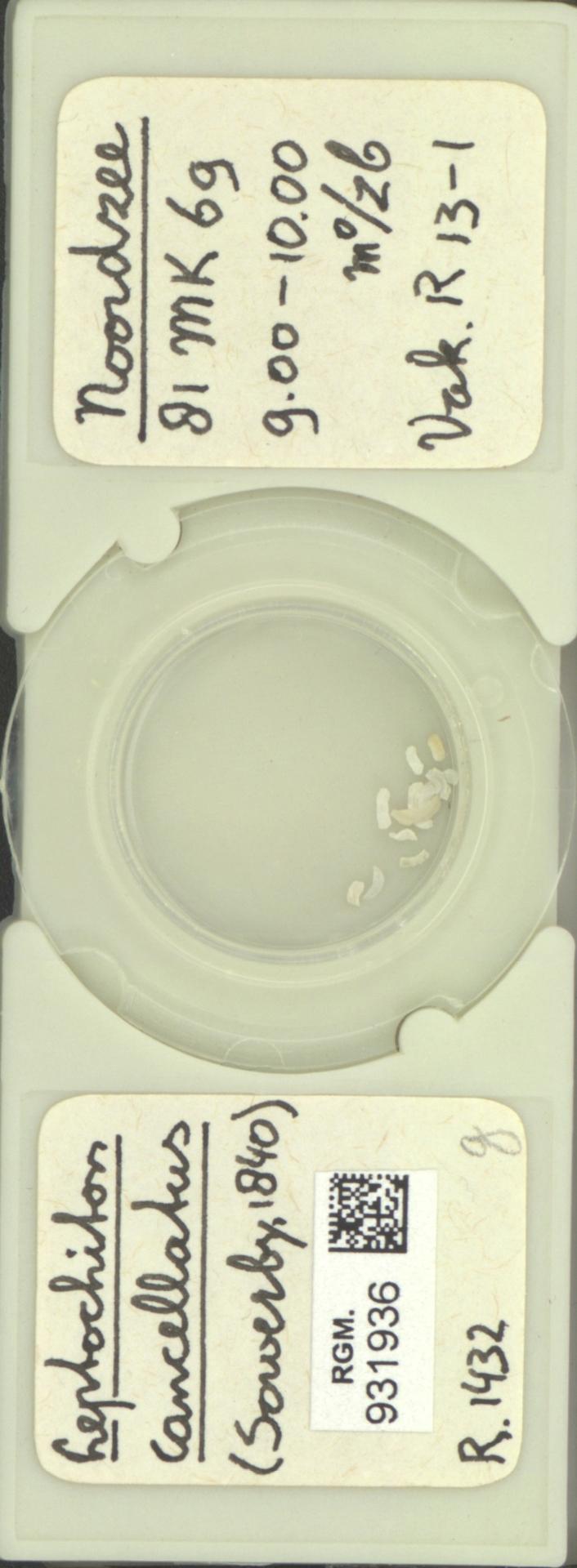 RGM.931936 | Leptochiton cancellatus Sowersby, 1840