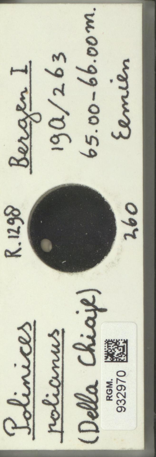 RGM.932970 | Polinices polianus Delle Chiaje