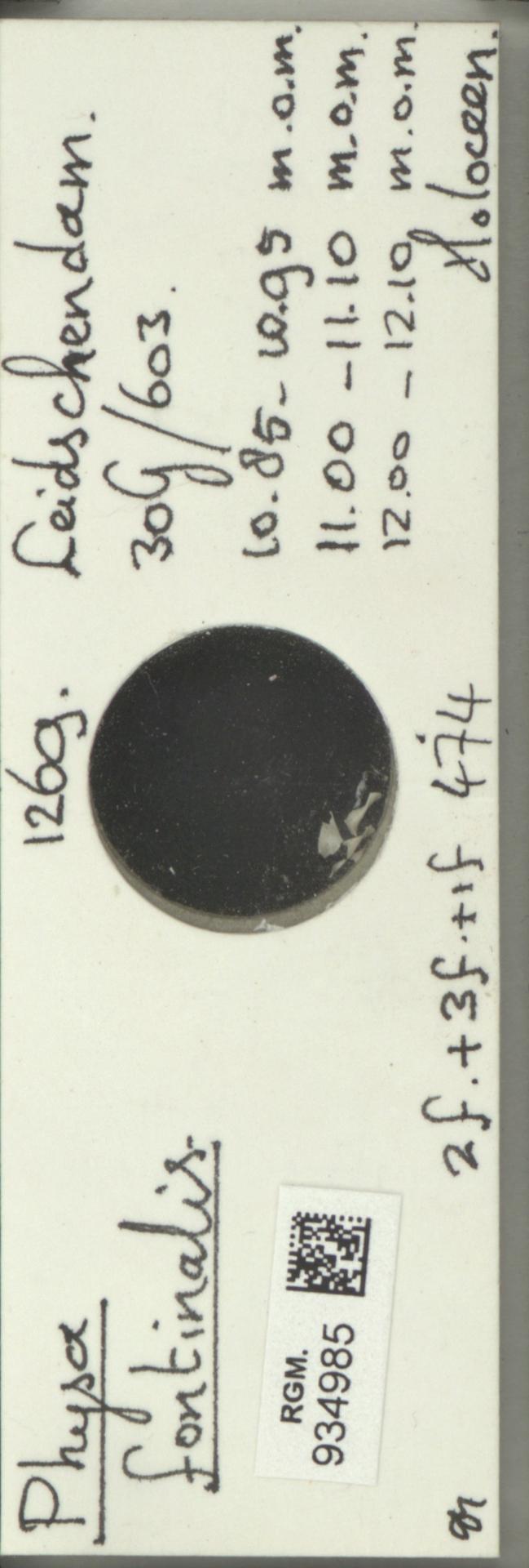 RGM.934985   Physa fontinalis