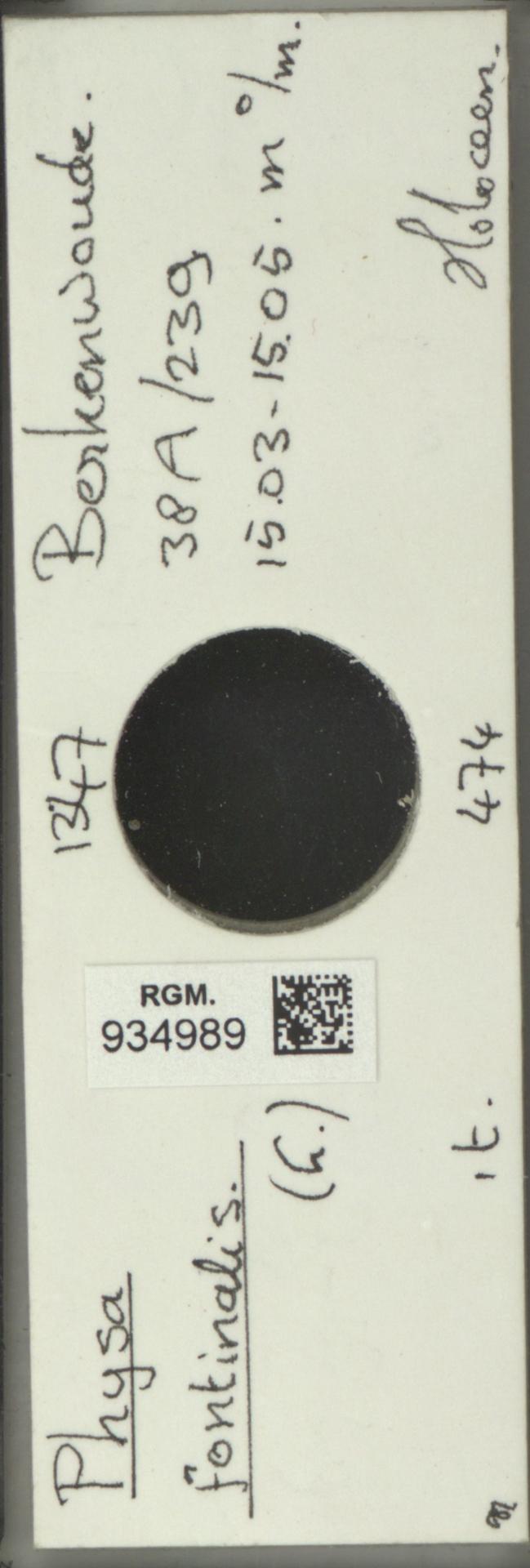 RGM.934989 | Physa fontinalis Linné