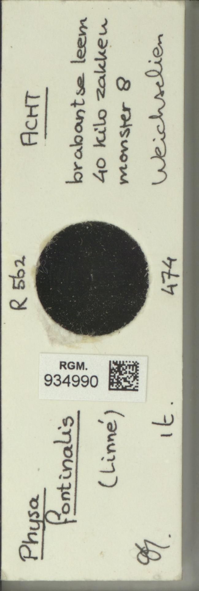 RGM.934990   Physa fontinalis Linné