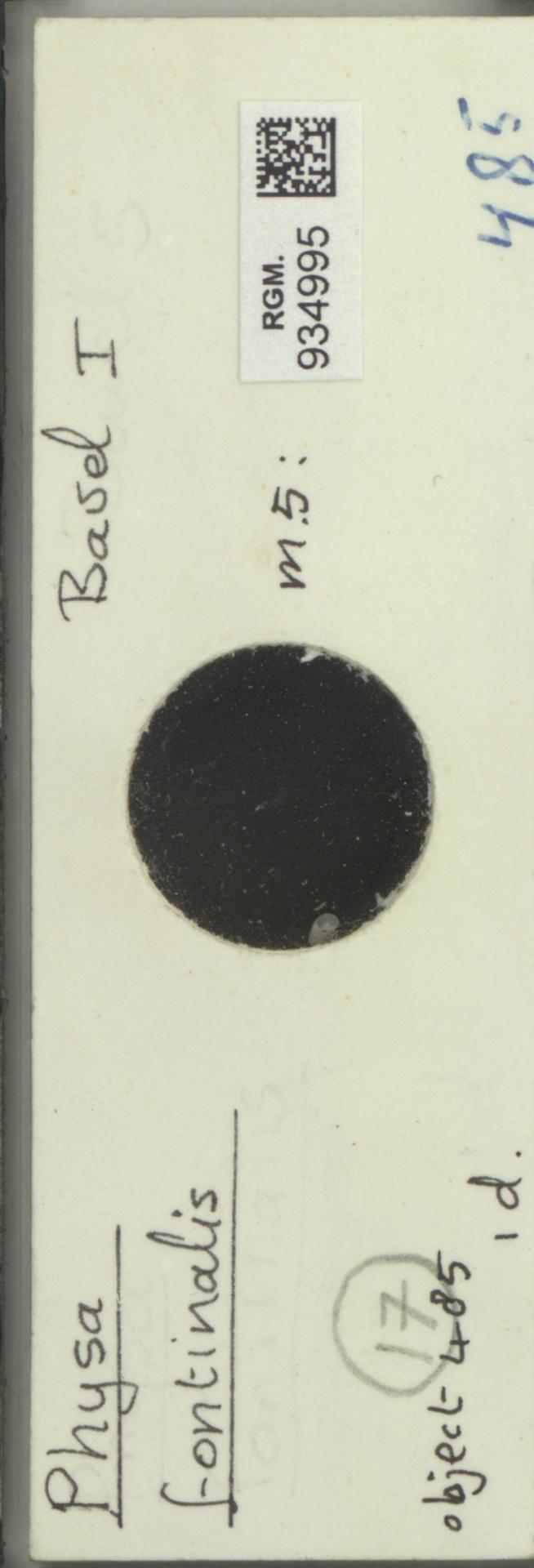 RGM.934995 | Physa fontinalis