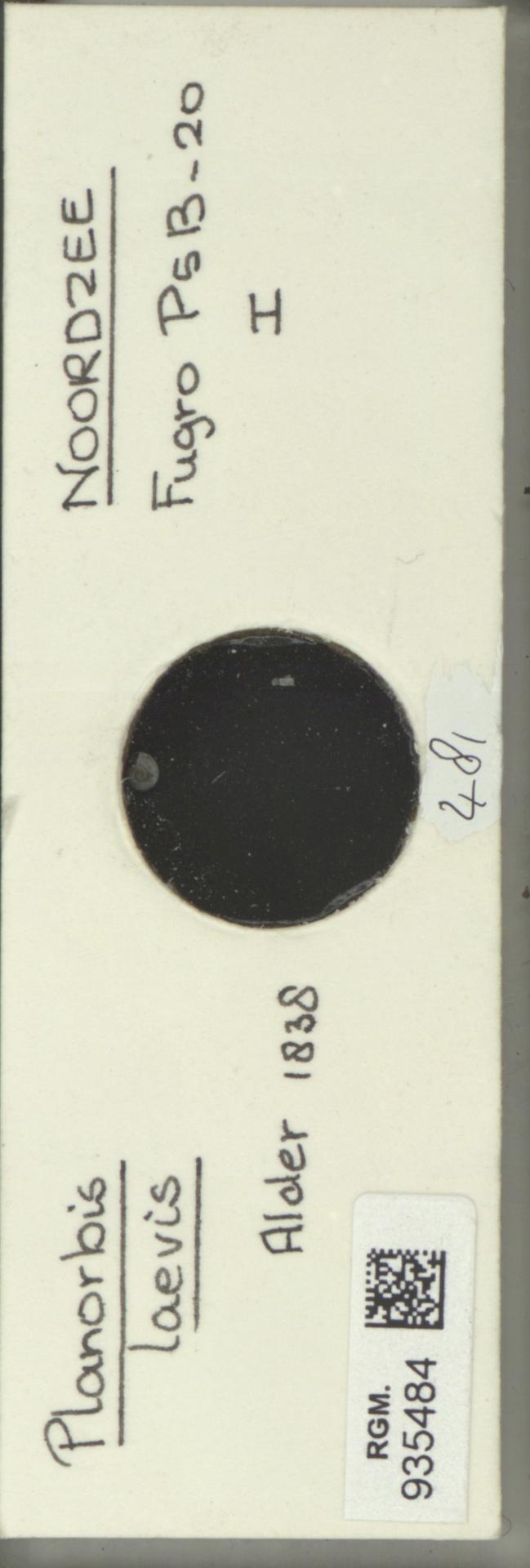 RGM.935484 | Planorbis laevis Alder, 1838