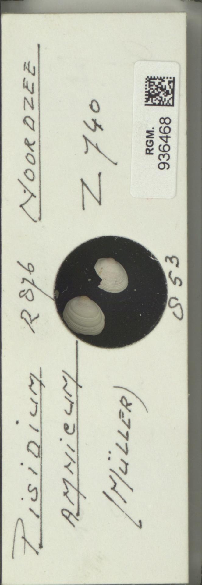 RGM.936468 | Pisidium amnicum (Müller)