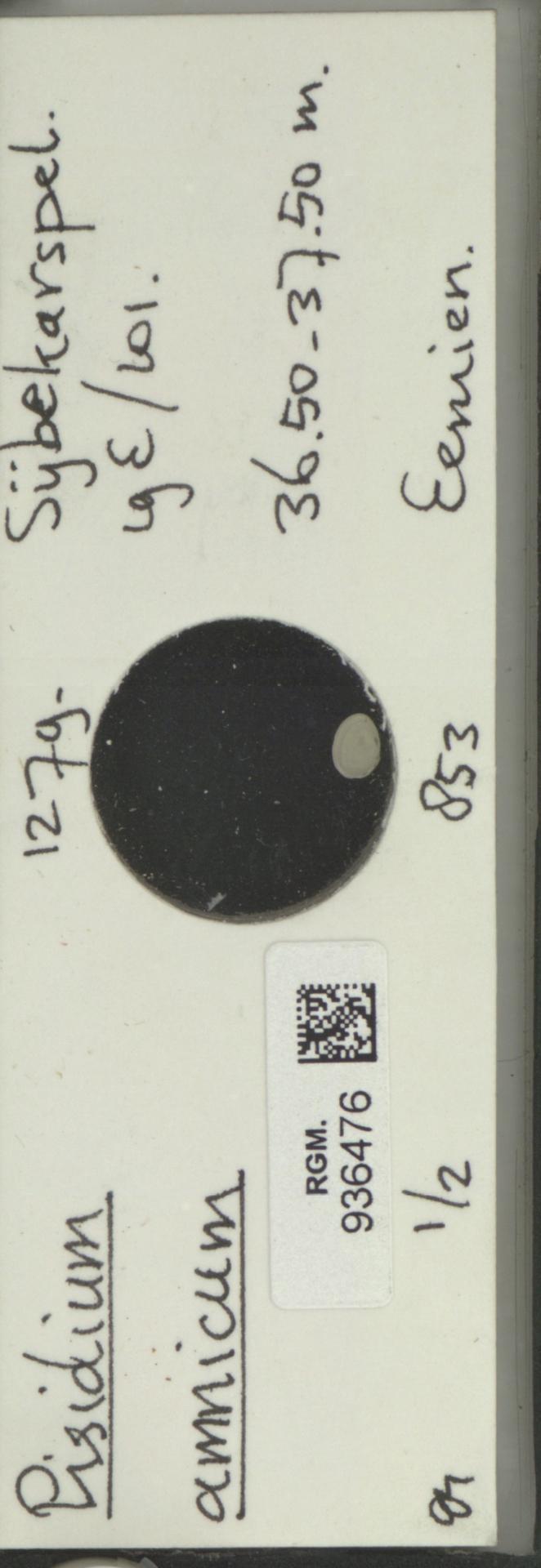 RGM.936476 | Pisidium amnicum