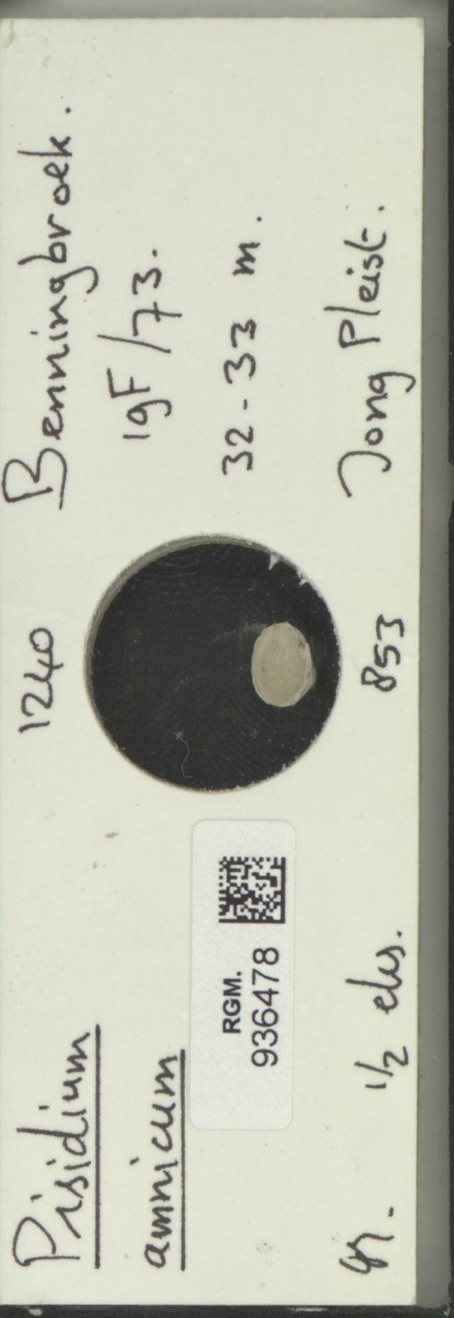 RGM.936478   Pisidium amnicum