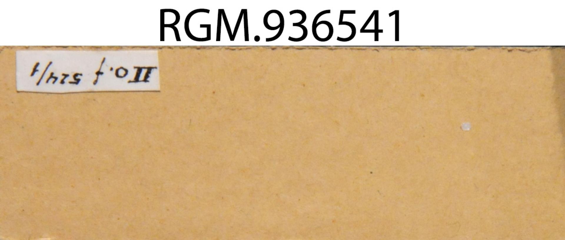 RGM.936541 | Pisidium amnicum (Müller, 1774)
