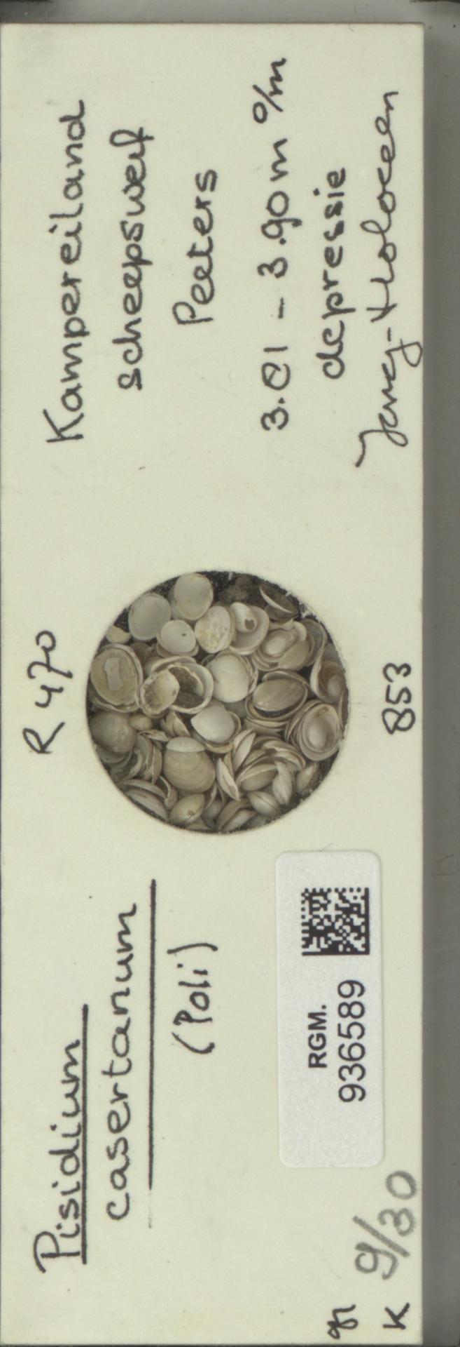 RGM.936589 | Pisidium casertanum Poli