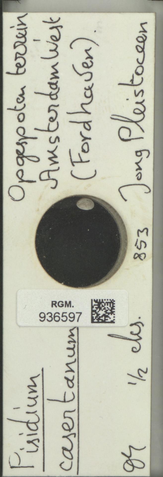 RGM.936597 | Pisidium casertanum Poli