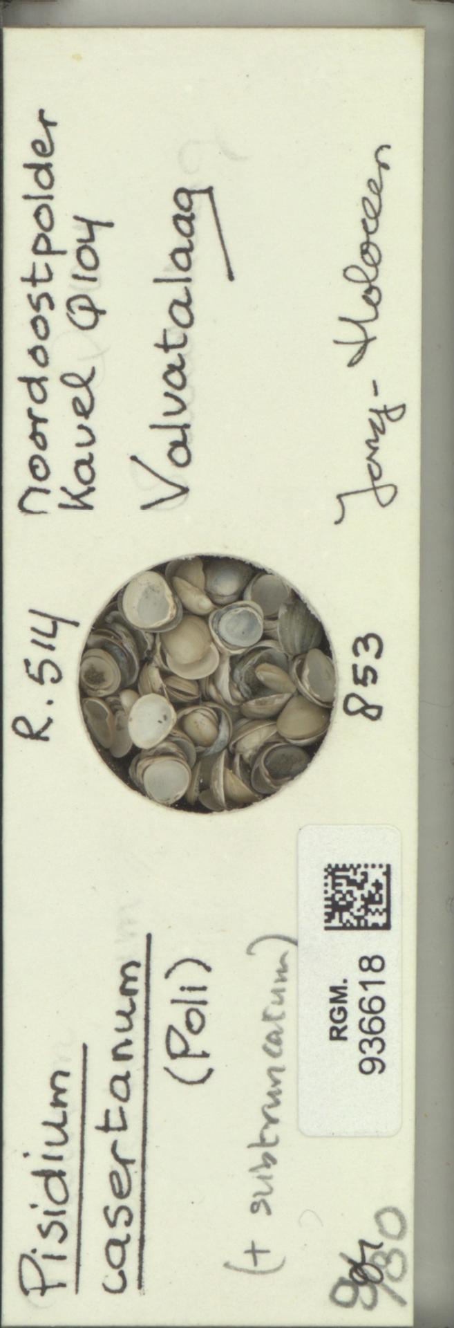 RGM.936618 | Pisidium casertanum Poli