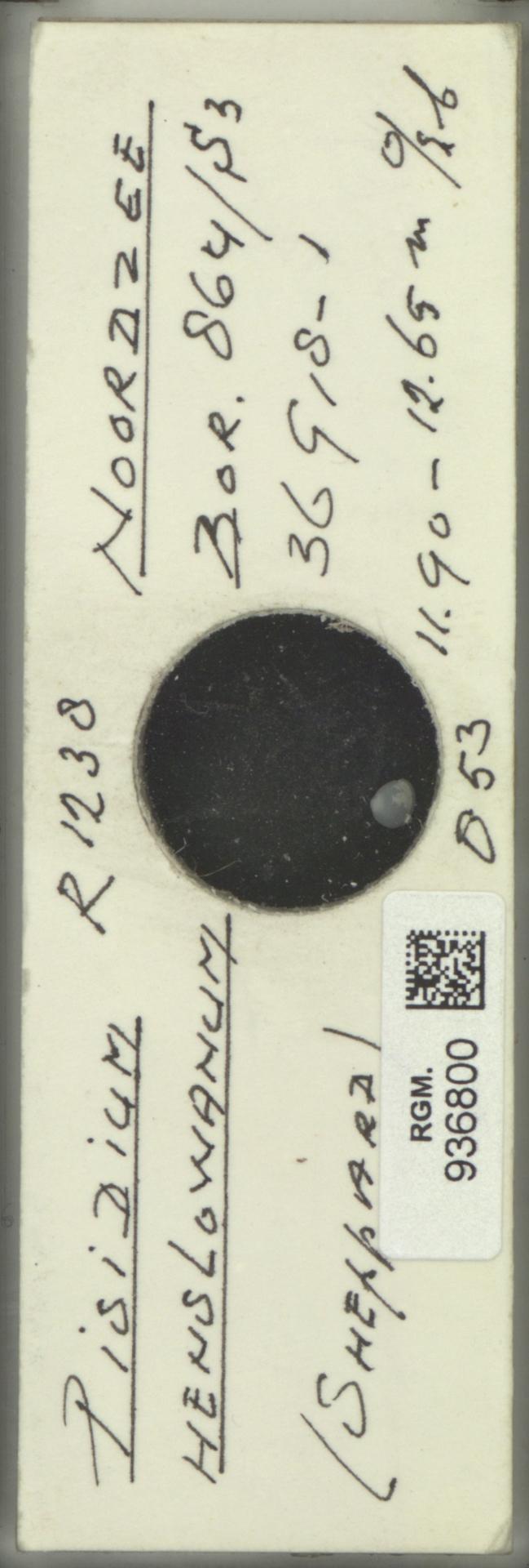 RGM.936800 | Pisidium henslowanum Sheppard, 1823