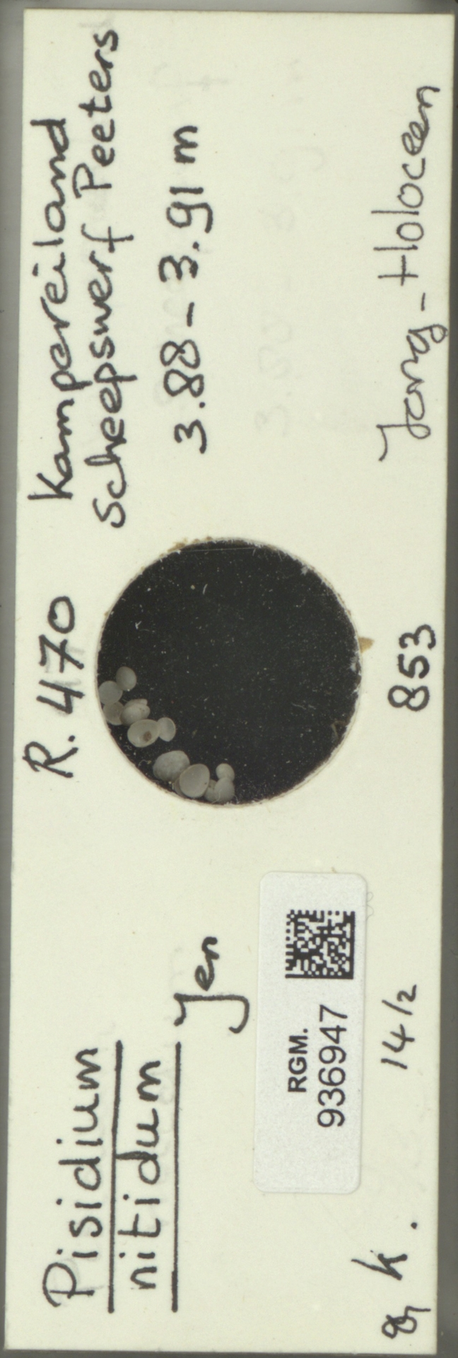 RGM.936947 | Pisidium nitidum Jen