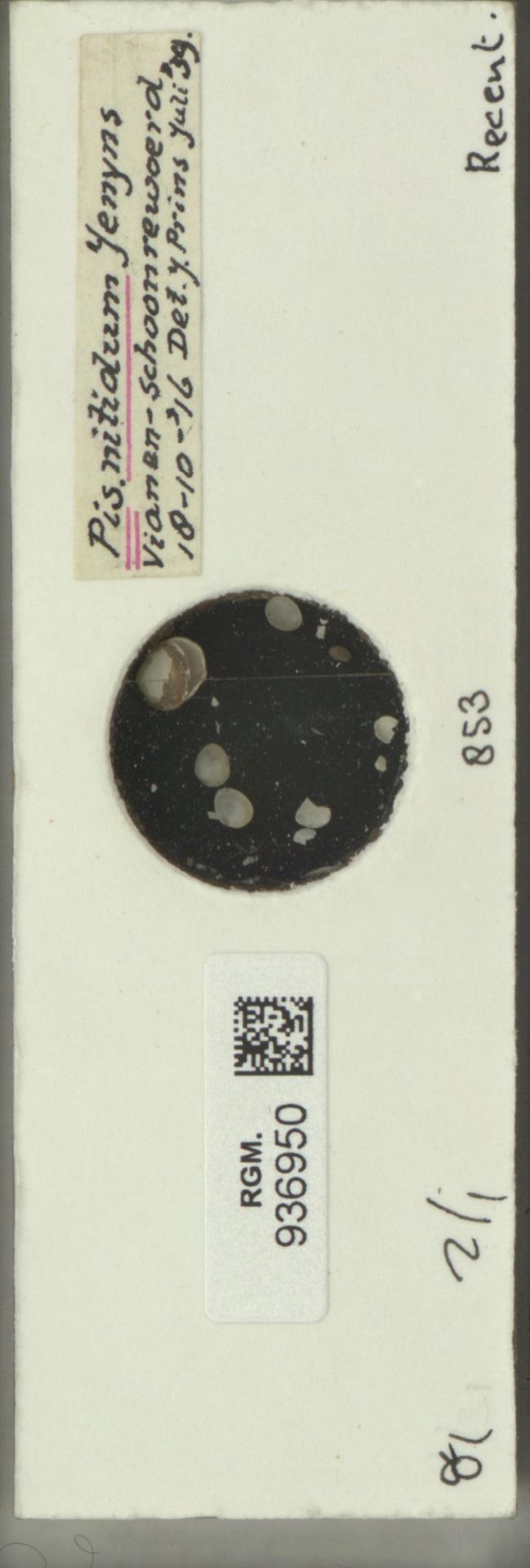 RGM.936950 | Pisidium nitidum Jenyns, 1832