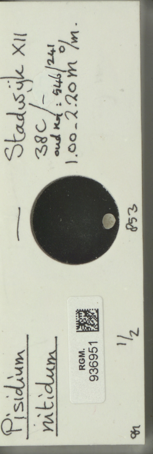 RGM.936951 | Pisidium nitidum Jenyns, 1832