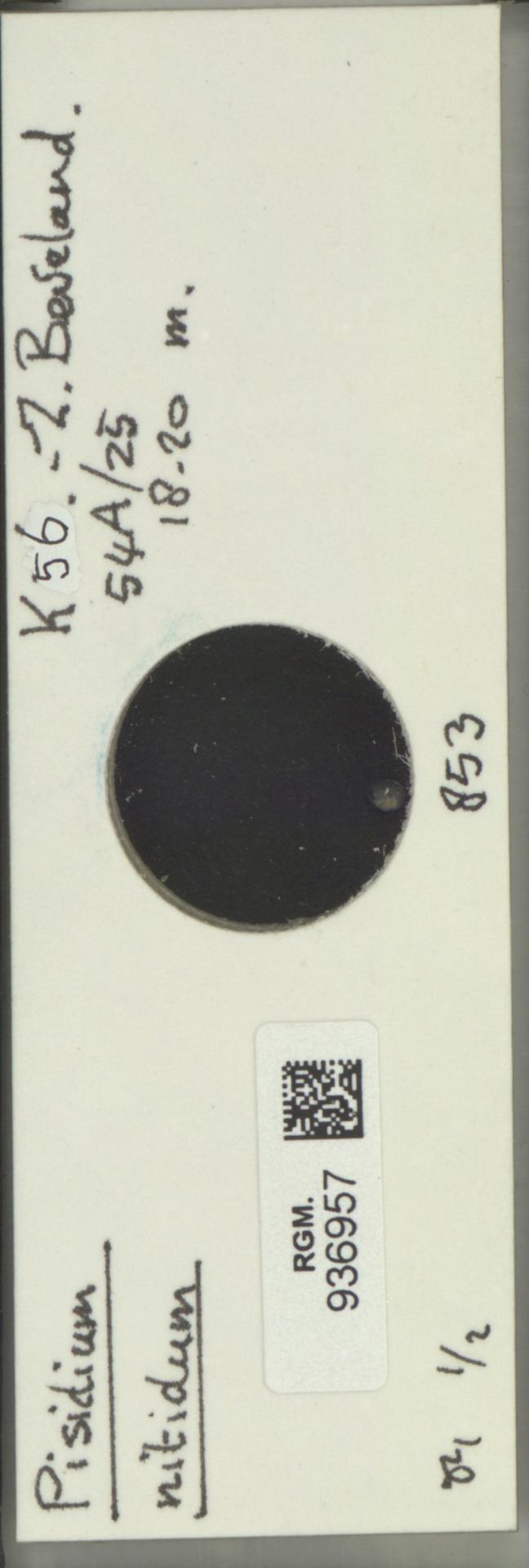 RGM.936957 | Pisidium nitidum Jenyns, 1832