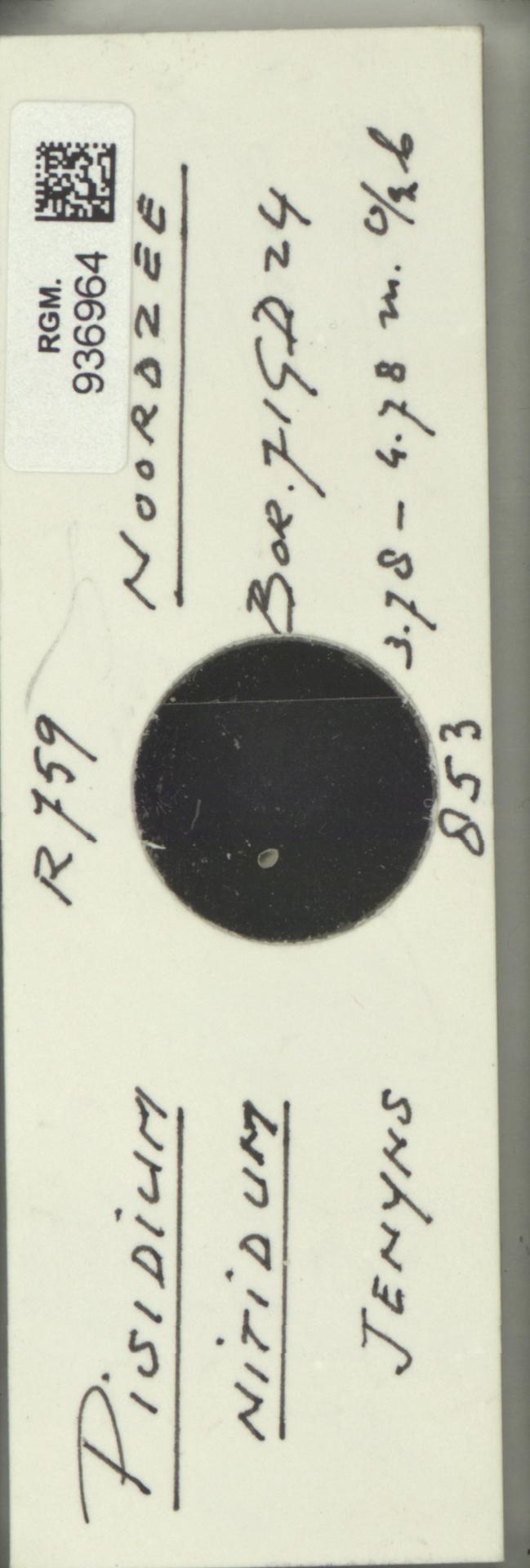 RGM.936964 | Pisidium nitidum Jenyns, 1832