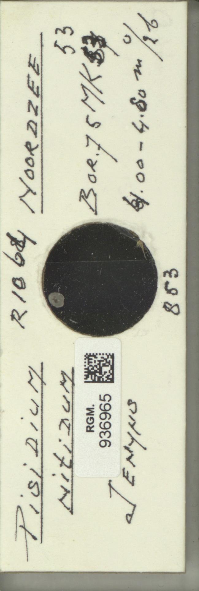 RGM.936965 | Pisidium nitidum Jenyns, 1832