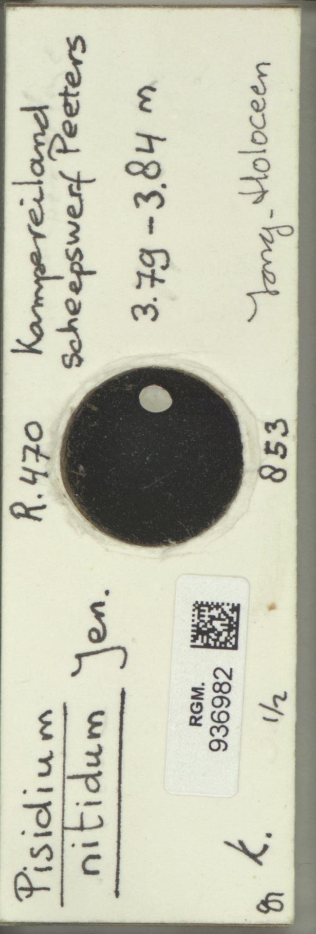 RGM.936982 | Pisidium nitidum Jen.