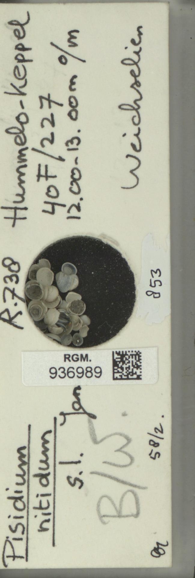 RGM.936989 | Pisidium nitidum Jenyns