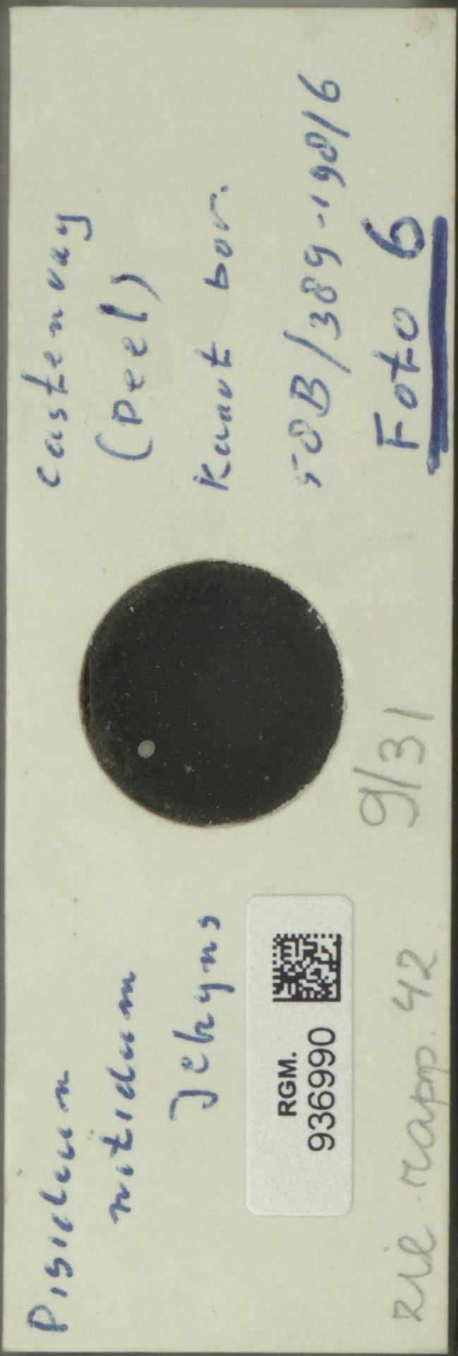 RGM.936990 | Pisidium nitidum Jenyns
