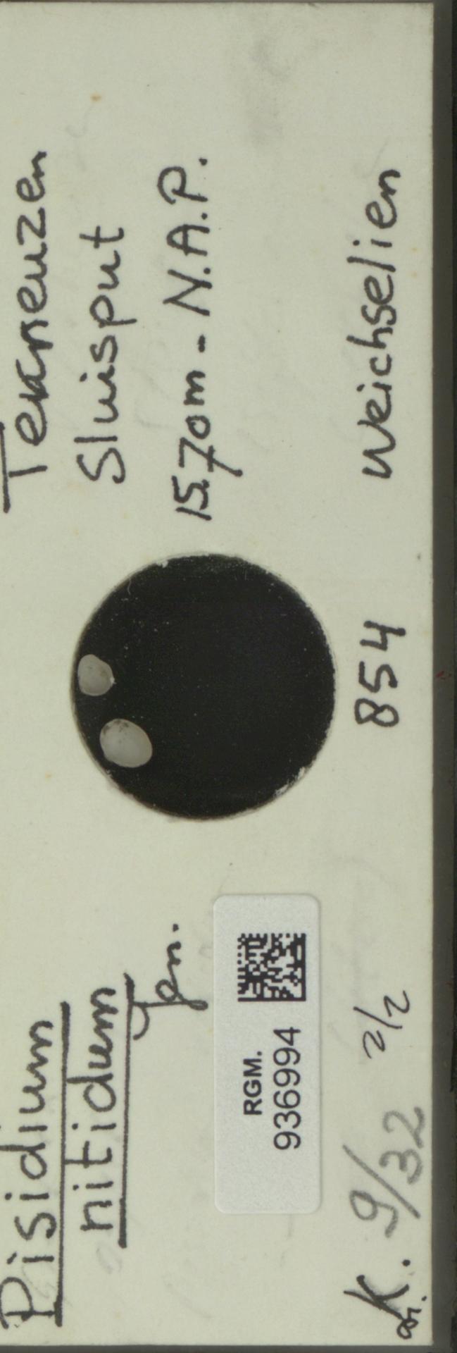 RGM.936994 | Pisidium nitidum Jenyns