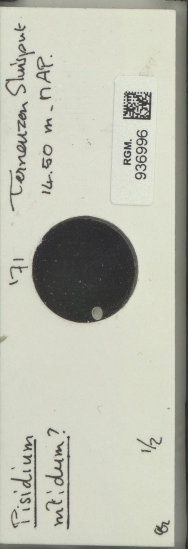 RGM.936996 | Pisidium nitidum