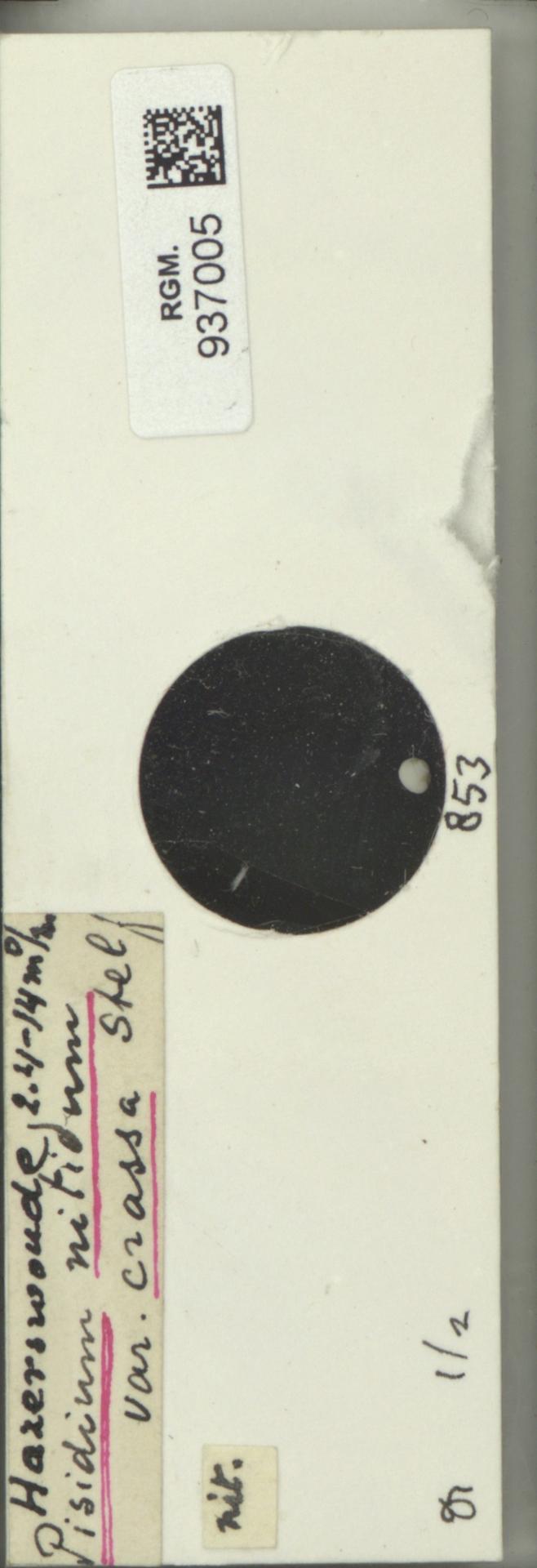 RGM.937005 | Pisidium nitidum