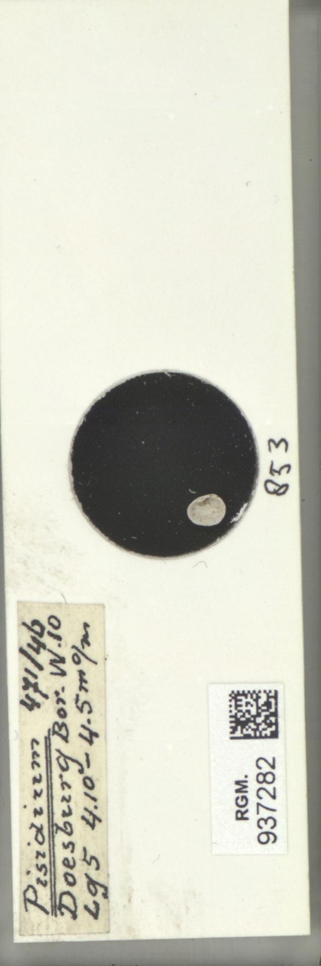 RGM.937282 | Pisidium
