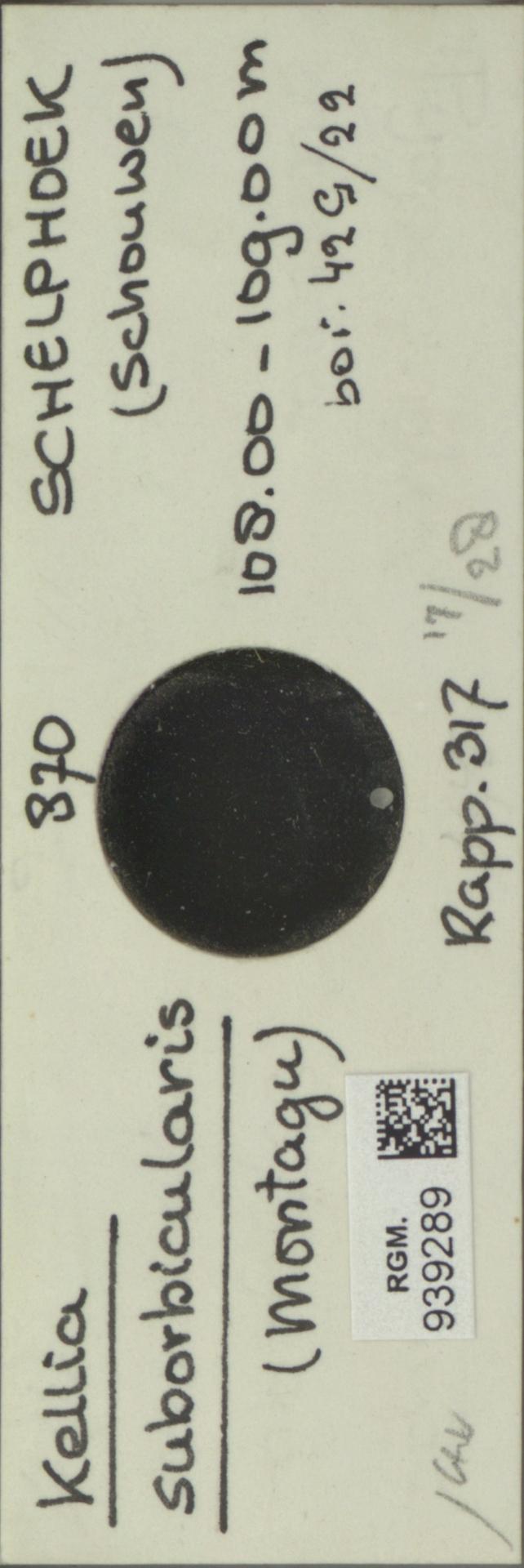 RGM.939289 | Kellia suborbicularis (Montagu)