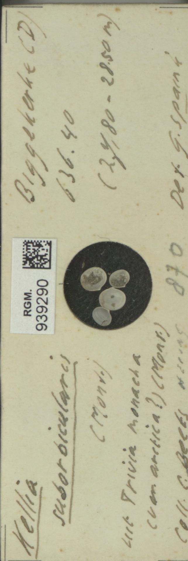 RGM.939290 | Kellia suborbicularis (Mont.)